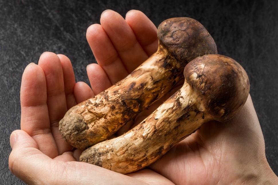 「山珍海味」中的山珍,松茸為何這麼貴?