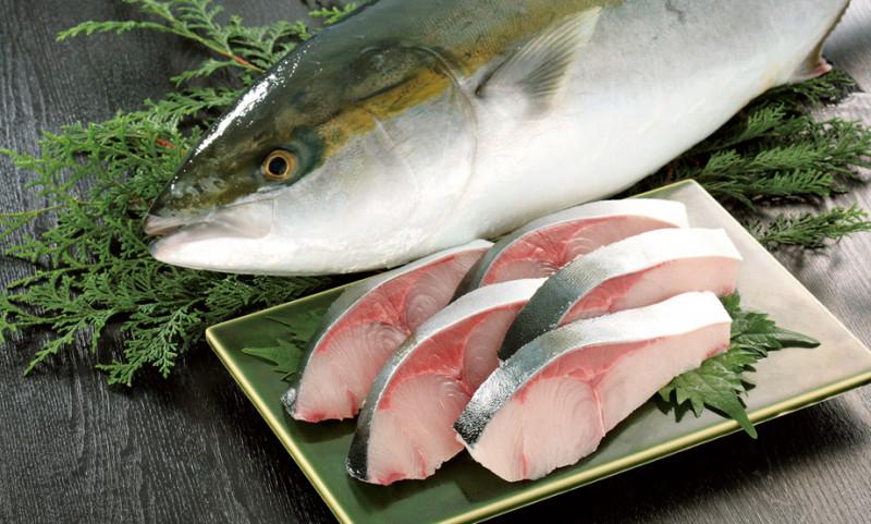頂級日本料理的超頂級魚肉 「冰見寒鰤」