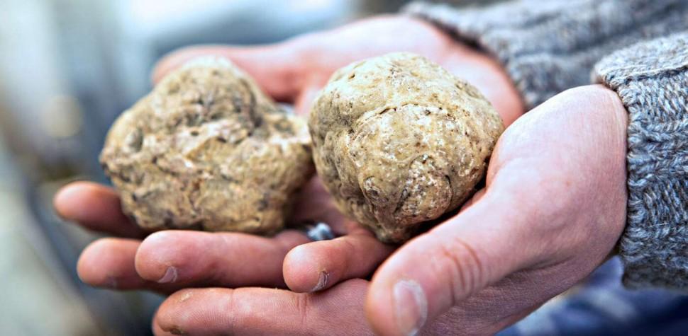食材知識庫 它們都是菌菇界的愛馬仕香奈兒