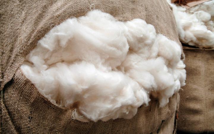 喀什米尔羊毛和一般羊毛有什麼差别?为何价格如此昂贵
